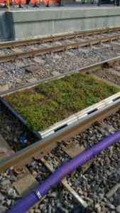 Manchester_Tram_trail Sedum trays or modules ready for laying