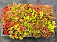 Sedum Installation Services
