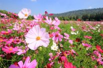 Pink wildflower mat
