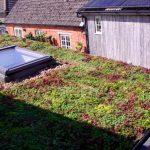 Sedum Mat on a summerhouse roof