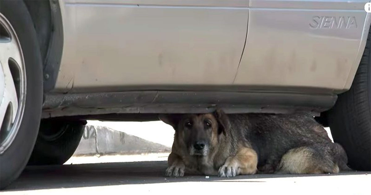 Dog hiding under car