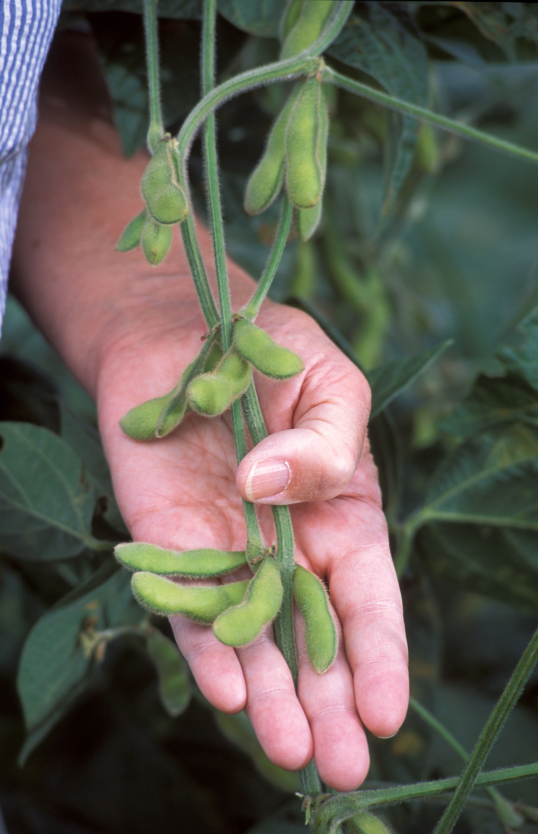 New Gmo Proposal Only Provides An Illusion Of Regulation