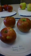 Apples ready for taste testing.