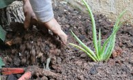Turning the soil in the garden