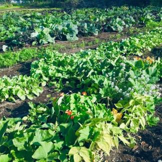 LIVE! Gardening Webinars