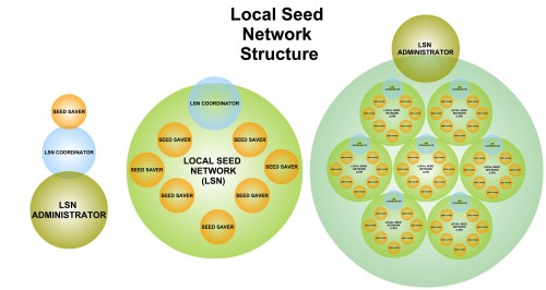 small resolution of local seed network structure diagram