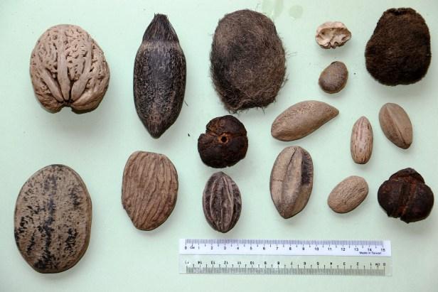Ulu Ulu Drift seeds 3P7A9355