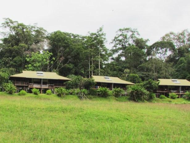 Dillenia excelsa Borneo IMG_6082.JPG