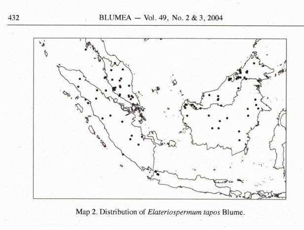 Elatiospermum tapos MAP.jpg