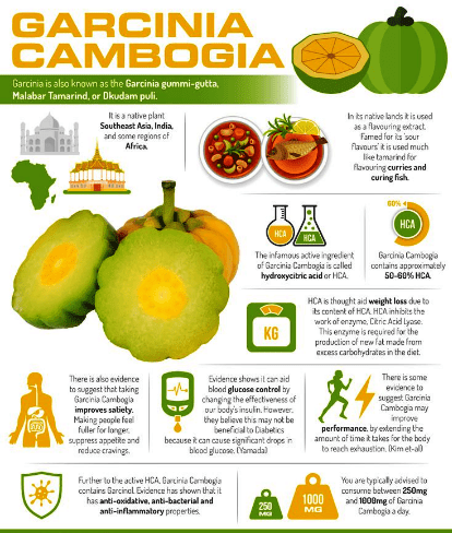 Garcinia cambogia Sc23w.png