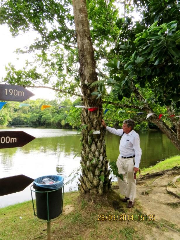 Pholidocarpus majadum IMG_0236.JPG