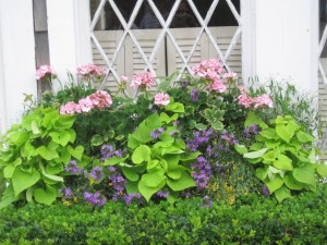 Window box in pale pink and blue