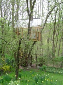 Tree house aerie