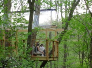 Tree house conversations
