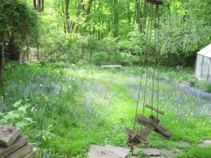 The meadow. Mowed just once a year except for the path that runs through it. Never fertilized or sprayed.