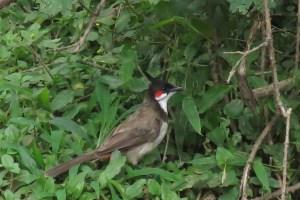 Birding in Ooty, India