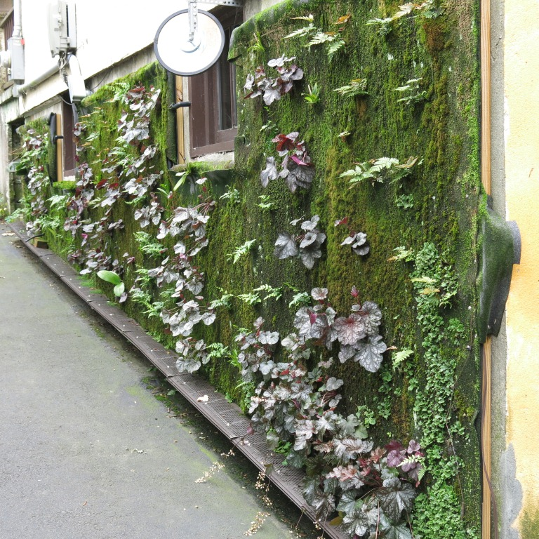 Vertical garden. July 2014