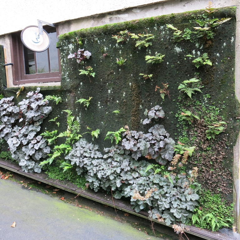 Vertical garden. September 2014