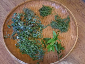 Harvest of herbs