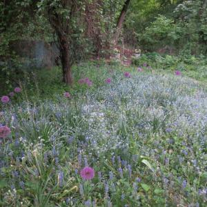 The meadow right now! I love it so.