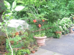 See how the railing is barely noticeable? Note the climbing hydrangea that will eventually billow out all over the railing.