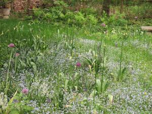 My meadow with natives and bulbs