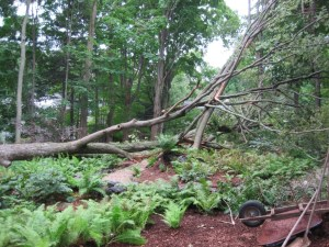 My friend Julie's garden after a storm.  Changed her woodland garden some.