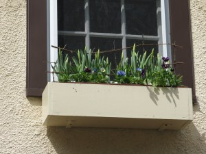 The window box. Should be in full flower by week's end