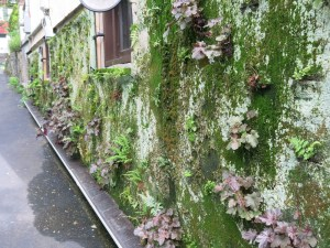 The vertical garden - a brilliant way to keep the building cool in summer. Water for plants is recirculated.