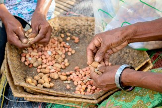Peanut farmer in Natabora.
