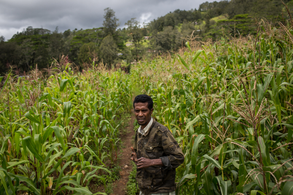 Climate change research is useful for understanding the impact on Timorese farmers' maize and rice yields © Conor Ashleigh