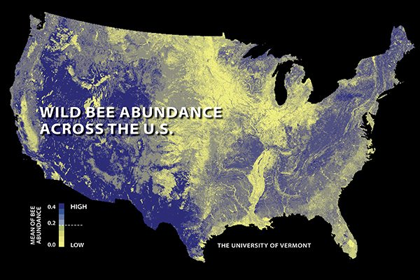 The first national study to map US wild bees suggests they're disappearing in many of the country's most important farmlands. Relatively low abundances are shown here in yellow; higher abundances in blue.