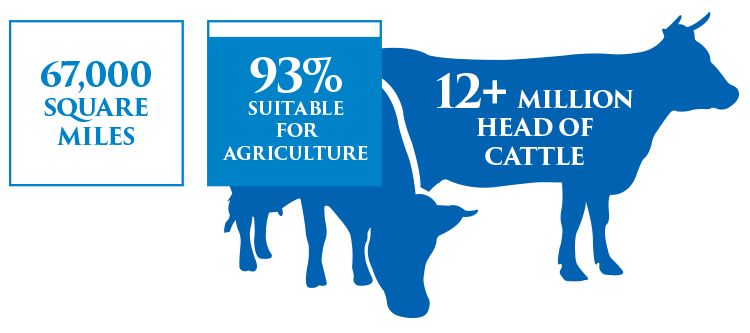 cattle-stats