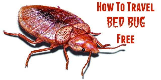 Bed Bug Illustration 2a