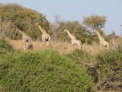 Posers..... Botswana 2013