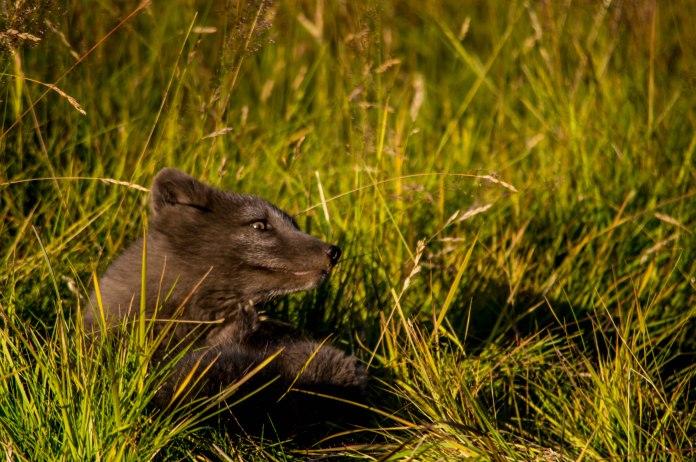 Frolicking in grass