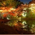 永観堂の紅葉2017の見頃やアクセスは?混雑やライトアップも!