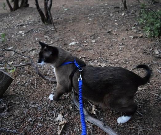 teal-leash