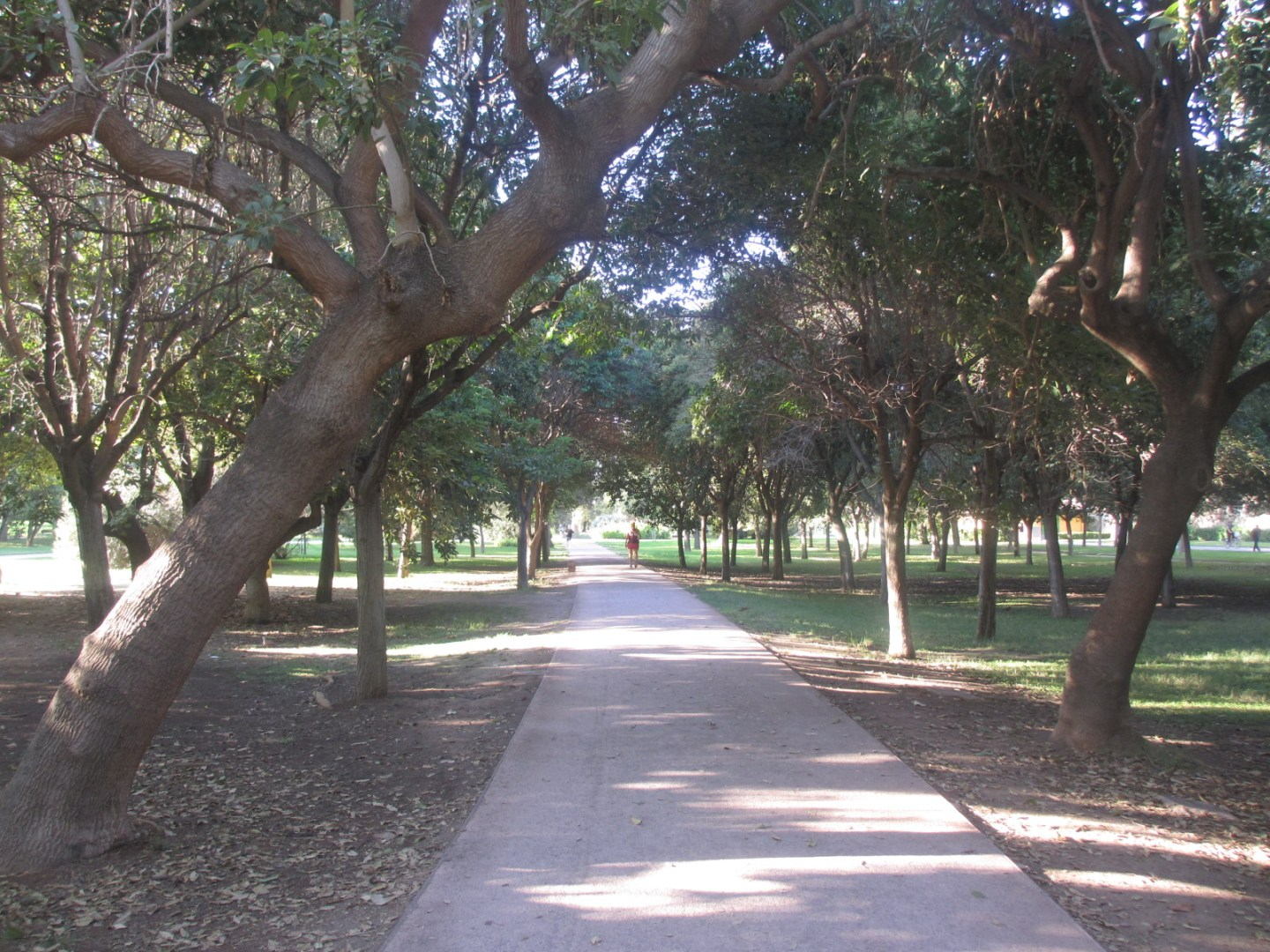 The old river bed park in Valencia
