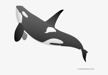 Beluga Whale Clipart Whale Png PNG Image Transparent PNG Free Download on SeekPNG