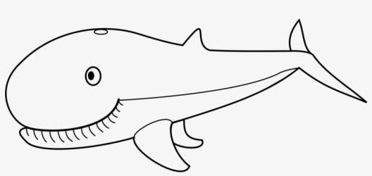 Cetacea Humpback Whale Beluga Whale Killer Whale Sperm Black And White Big Whale PNG Image Transparent PNG Free Download on SeekPNG