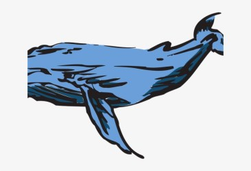 Humpback Whale Clipart Transparent Whales PNG Image Transparent PNG Free Download on SeekPNG