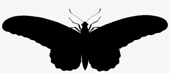 Illistration Clipart Butterfly Silhouette Butterfly Silhouette Hd PNG Image Transparent PNG Free Download on SeekPNG