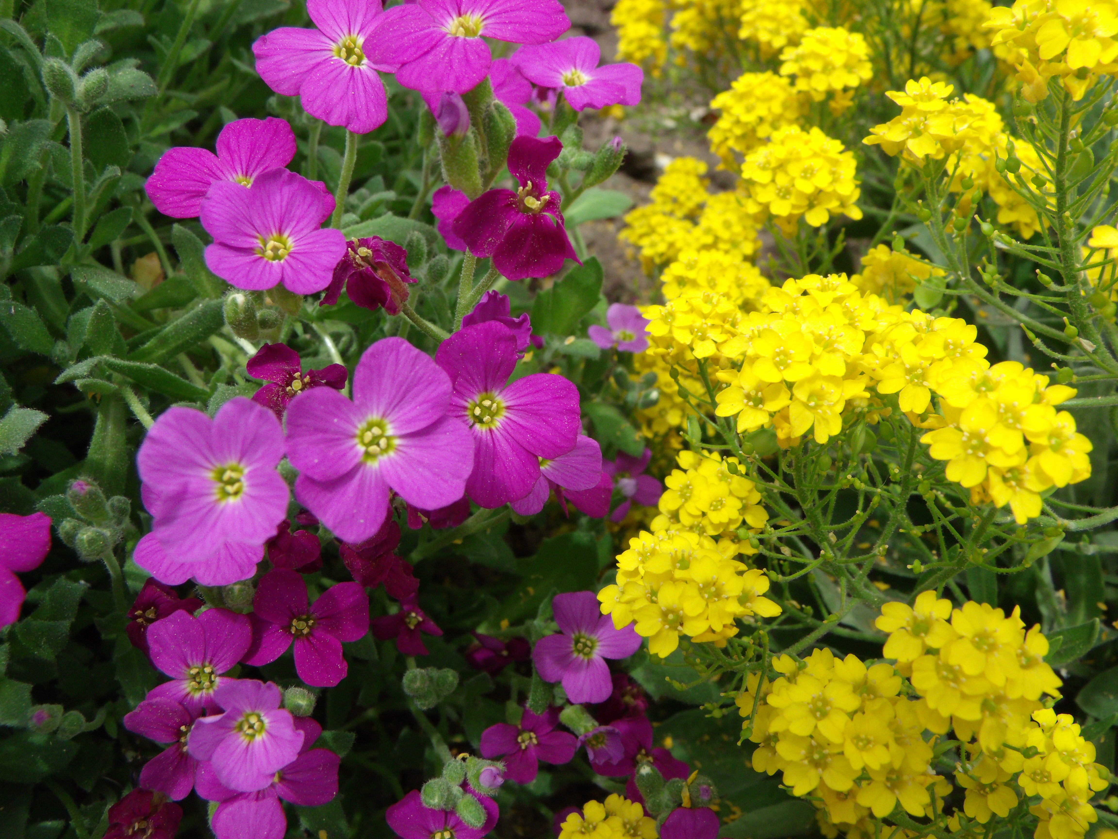 purple and yellow flowers  Scotts PlaceImages and Words