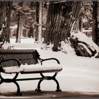 Park bench....