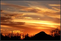 Saguaro silhouette sunset | Scott's Place...Images and Words