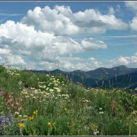 wildflowers, clouds, and mountains