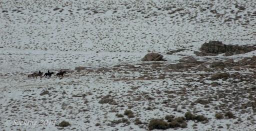 Antelope Island study in white 27