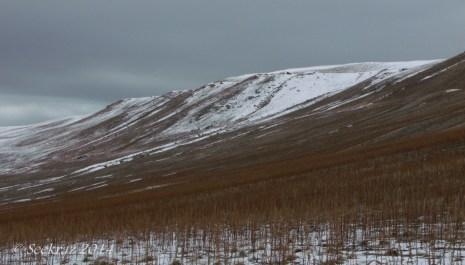 Antelope Island study in white 29