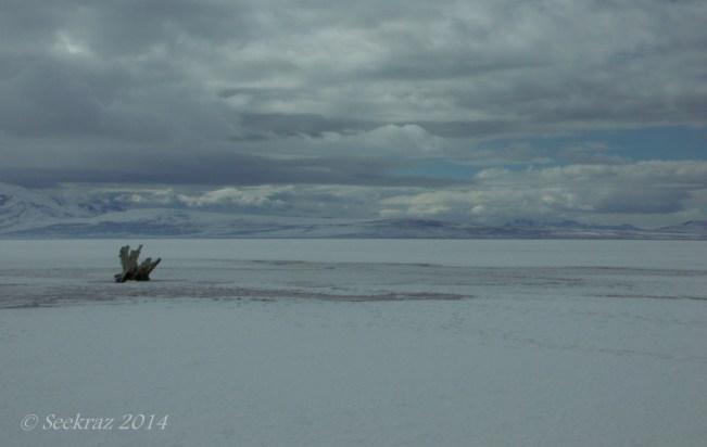 Antelope Island study in white 36